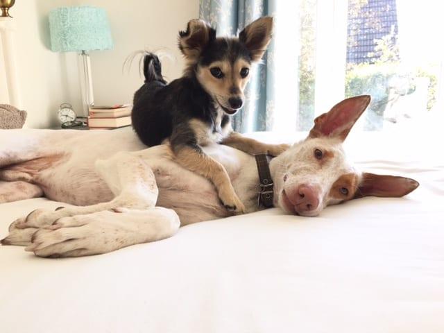 mickey&marysdog