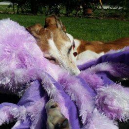 Octopus Family Dog Toys