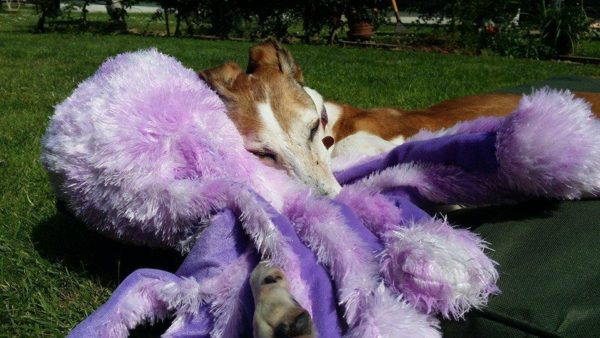Octopus Family Dog Toys Gor Pets