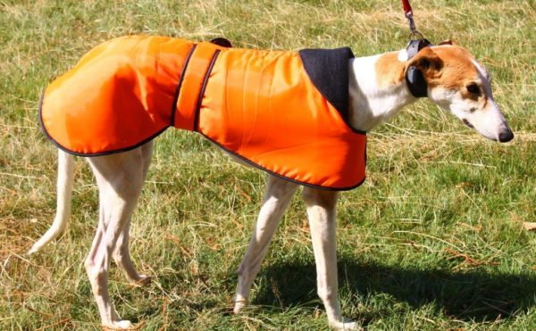 Winter Coats for Greyhounds Lurchers