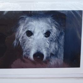 Greyhound Cards & Notelets