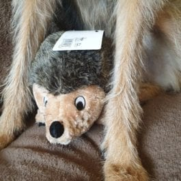Huggable Hedgehogs Dog Toys