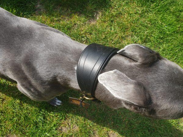 Greyhound & Lurcher Collars Digby & Fox