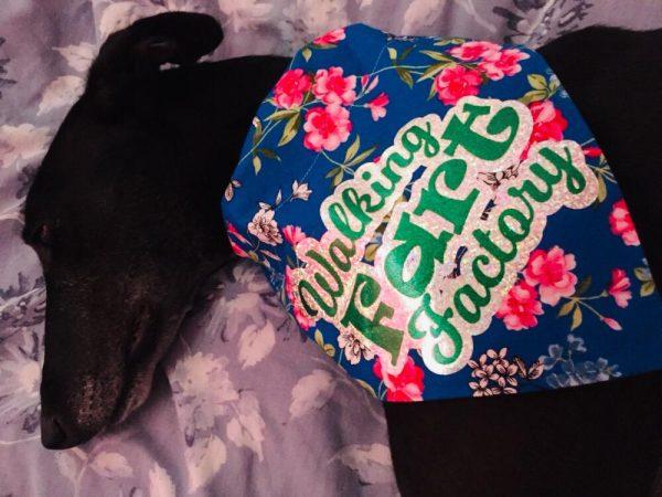 Stylish Bandanas For Dogs