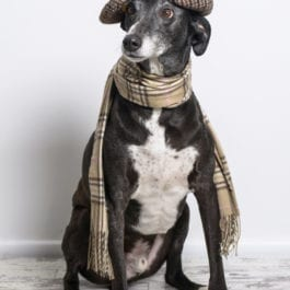 Clothing For Dogs & Stylish Apparel