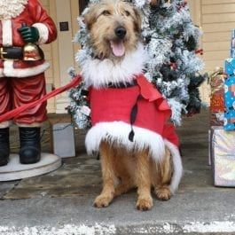 Christmas Shop For Special Houndies