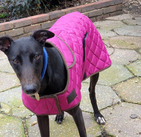 Winter Dog Coats raspberry