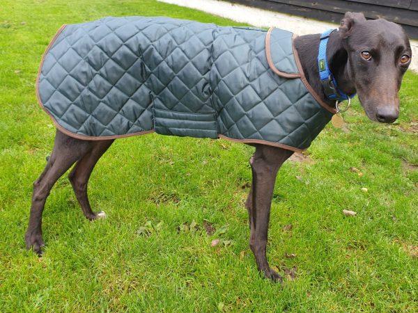 Winter Dog Coats green