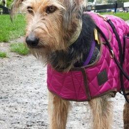 Winter Coats Digby & Fox