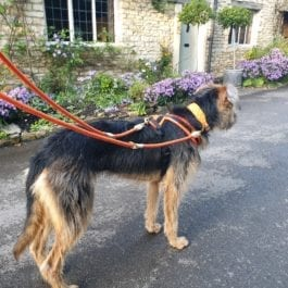 Double Ended Reflective Lead Digby & Fox