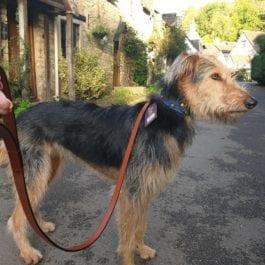 Digby & Fox Dog Leads