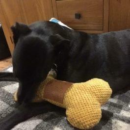 Dog Toys Honking Bones