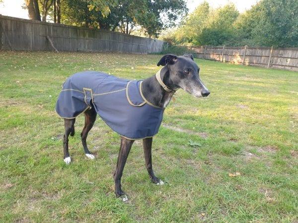 Greyhound Softshell Coat Digby & Fox