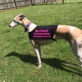 Rescued & Rehomed By KGR Jackets